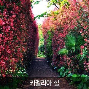 [입장권]제주 카멜리아힐(동백정원)/ 제주도여행/ 모바일쿠폰/ 관광지입장권
