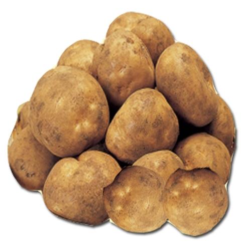 국산 감자
