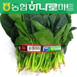 [농산] 시금치 1단-/국산/일동