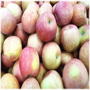 [농산] 사과10개/국산사과(약간의 흠집